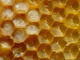 Friss tiszta méhpempő az egészség érdekében