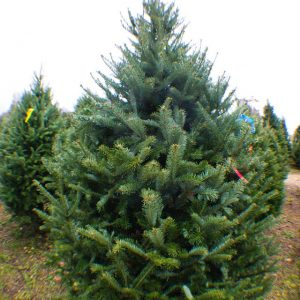 Karácsonyfa webshop