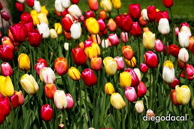 Rengeteg fajta virághagyma a webáruházban
